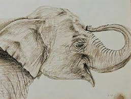 Baby Elephant Drawings Baby Elephant Drawings Page 3 Of 3 Fine Art America