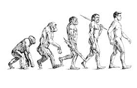 Image result for evolutionary anthropology