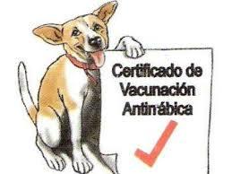 Resultado de imagen para animales enfermos con rabia