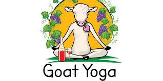 goat yoga wine tasting gift certificate