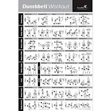 Newme Fitness Dumbbell Workout Exercise Poster Now Laminated Strength Training Chart Build Muscle Tone Tighten Home Gym Weight Lifting