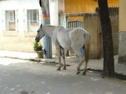 Resultado de imagem para cavalo NA RUA