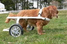 how to make a diy dog wheelchair 5