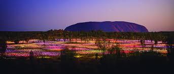 Field Of Light Uluru Free Field Of Light Uluru