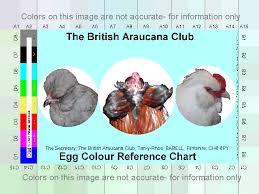 Egg Color Chart Araucana Eggs