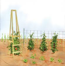 tomato trellis and wooden cage