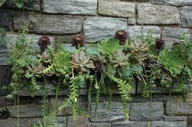 succulents with their bold foliage along with cactus beautifully complement the stone mantel they are growing on thriving in a partially shaded area