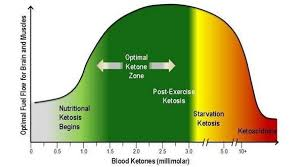 Ketone Levels And Glucose Hcg Diet Metabolic Diet