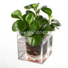 office planter. Creative Clear Tube Plant Pot / Flower Decorative Self-Watering Planter Fish Tank For Office A