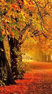 Wallpaper Nature autumn, forest, park ...