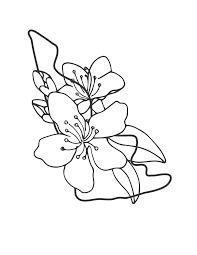 Tranh tô màu hoa mai đẹp nhất dành tặng bé yêu tập tô trong 2021