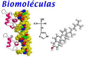 Estudio de las Biomoléculas: Importancia de las Biomoléculas