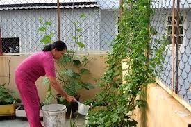 Kết quả hình ảnh cho tưới nước rau tại nhà