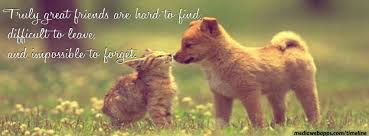 Quotes About Pets And Friendship Inspiration Quotes Being A Good Cat On QuotesTopics