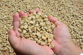 White bison coffee represents authenticity, solid character, & strength of. White Coffee Thoughts Coffee