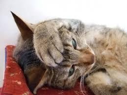 「悩む  猫」の画像検索結果