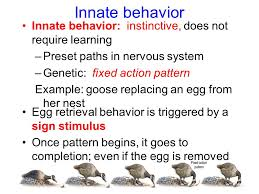 Fixed Action Pattern Example Delectable Behavioral Biology Chapter Ppt Video Online Download