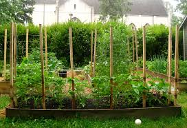 luxury tomato trelli idea trying out a new for trellise regular midwesterner thi year i built
