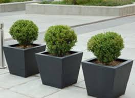 tips for growing shrubs in containers