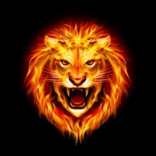 royalty free angry lion hd wallpaper