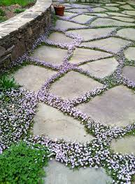 superb patio ground cover ideas 9 ground cover grows in between the stones 736 x 1000