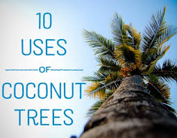 uses of coconut trees hubpages 10 uses for coconut trees
