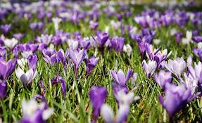 Image result for Photographs of spring flowers