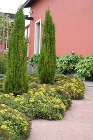 Small Picture Mediterranean Garden Design How to Create a Tuscan Garden Shrub