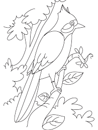 Small Picture Nightingale perched on a branch coloring page Download Free