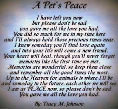 Loss Of Pet Quotes Interesting Quotes About Loss Of Pet
