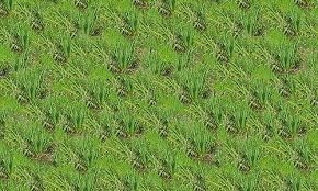 tall grass texture. Long Seamless Grass Textures Free Tall Texture