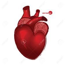 Coeur Humain Anatomical Sur Fond Blanc Dessin Dans Le Style De