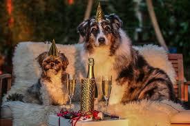 Die Besten Geschenke Für Hundebesitzer Und Hundeliebhaber