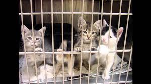 animal shelters sad. Wonderful Sad The Sad Truth About Animal Shelters Music  I Closed My Eyes Talked To  Trees By Nemean Lion YouTube Intended Animal Shelters Sad