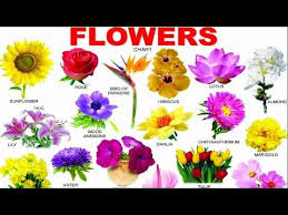Videos Matching Flower Name For Kids Revolvy