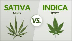 Sativa And Indica Chart Sativa Vs Indica Know The Major Differences Guide