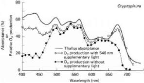 Action Spectrum Photosynthesis And Wavelength Of Incident Light Aquatic