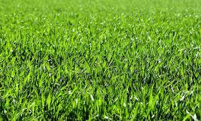 grass. Delighful Grass Grass Paper Inside Grass G