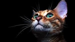 Cat Eyes Wallpaper 4K #8.3230
