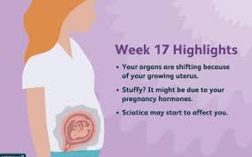 26 Weeks Is How Many Months Chart How Many Months Pregnant Are You