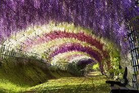beautiful flower garden with hanging flowers