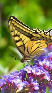 Little purple flowers, butterfly ...