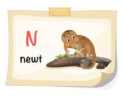 animal alphabet letter n for newt illustration vector