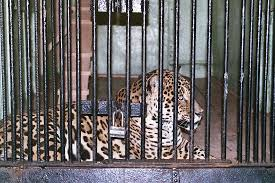 zoo animals in cages. Fine Animals Zoo Animals In Cages For Zoo Animals In Cages E