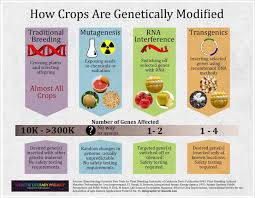 gmo essay dna and gm foods the logical place reflective essay  dna and gm foods the logical place dna and gm foods