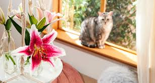 Notwithstanding, its entirety is still toxic. Which Plants Are Poisonous To Cats A Complete Guide