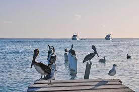 Image result for marina venezuela