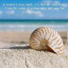 sea shell quotes the seashell is never empty it is filled with many things