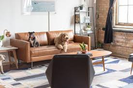 west elm office. West Elm - Dogs Of Instagram Office Tour