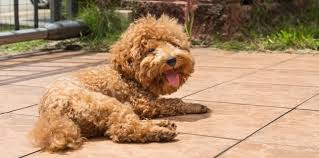 Does My Dog Have Allergies? | Allergies in Colorado Dogs